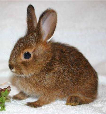 cute-hare-leveret