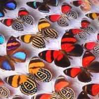 The Butterfly's Revenge - A Short Horror Story