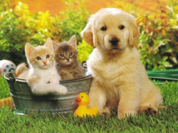 beautiful-cat-and-dogs-together